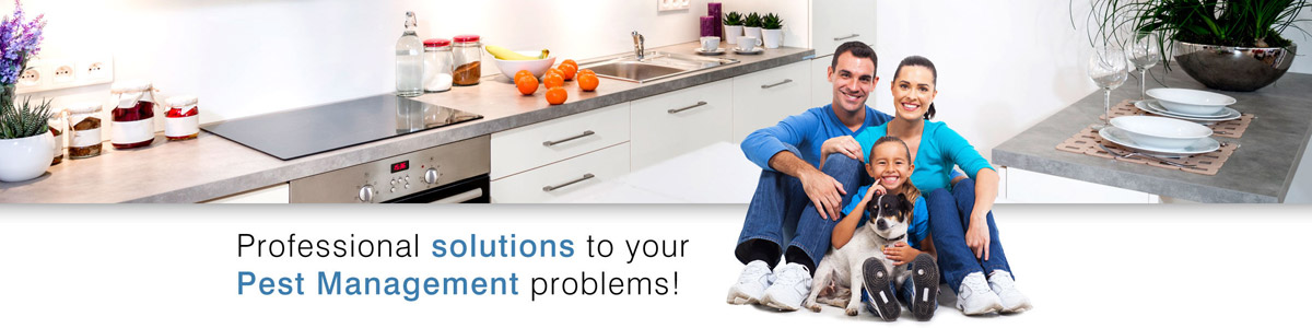 Professional Solutions To Your Pest Management Problems