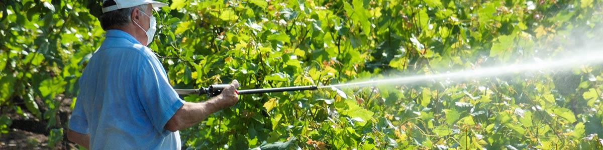Pest Control Service Provider